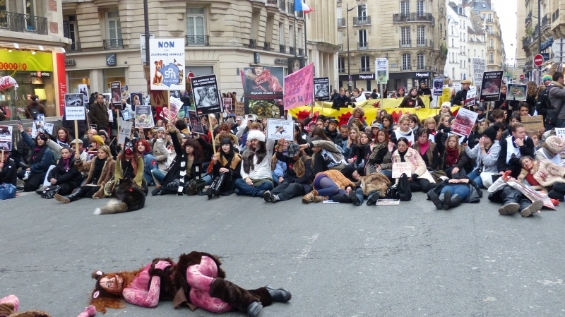 13 - Marche Contre La Fourrure - Paris 24 novembre 2012. 248869P1010450