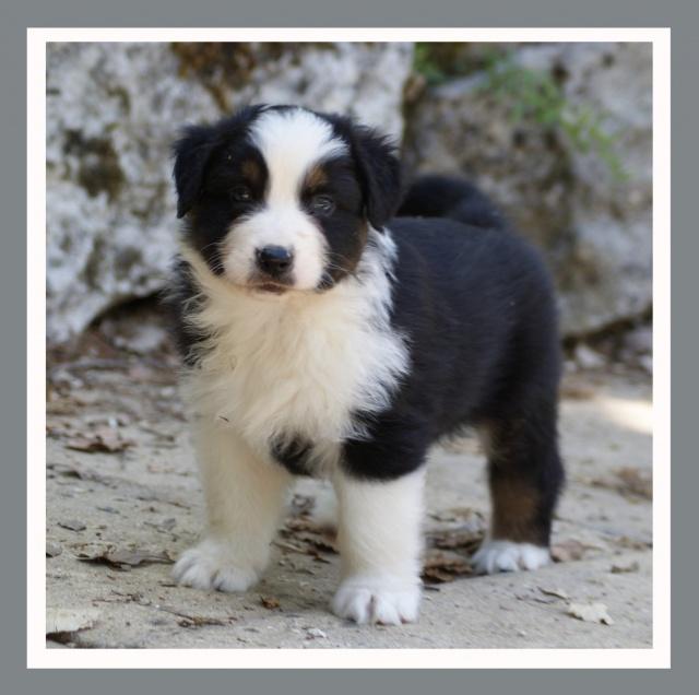 Un éducateur canin sauve un chien (vidéo choquante) 253108doudou