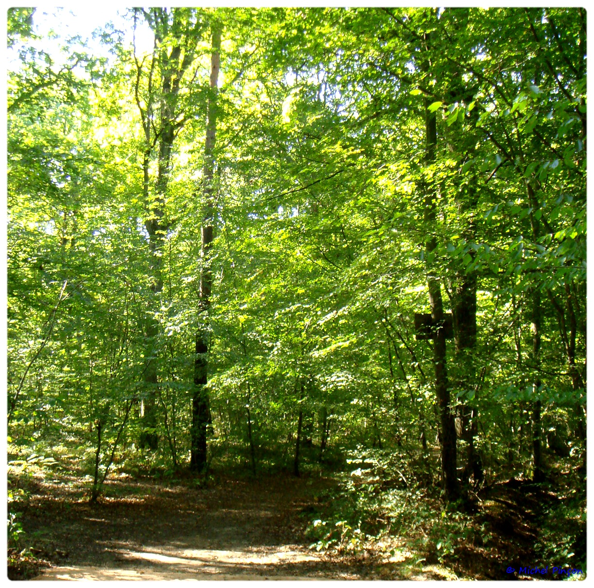 [fil ouvert] la forêt dans tous ses états - Page 6 263108DSC011116