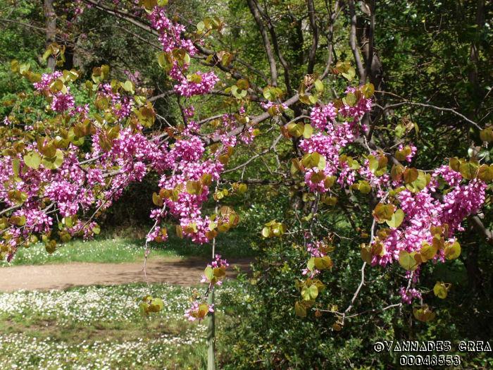 """La Vallée de St Pons """" La Vallée Rose """" à Gemenos Bouches du Rhône ♥♥♥ 26635322"""