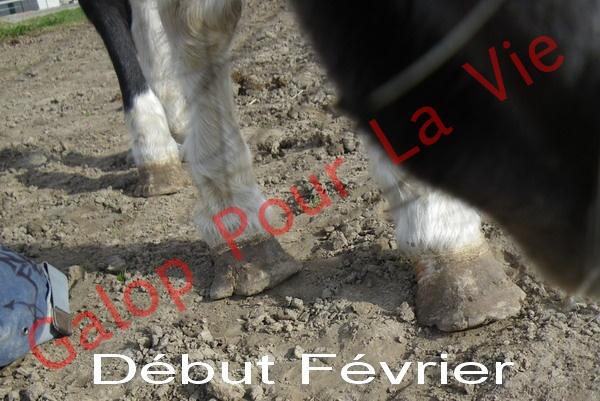 LOONY -  ONC poney né en 2001 - Adopté en juin 2011 par Carole 2683184FEVRIER