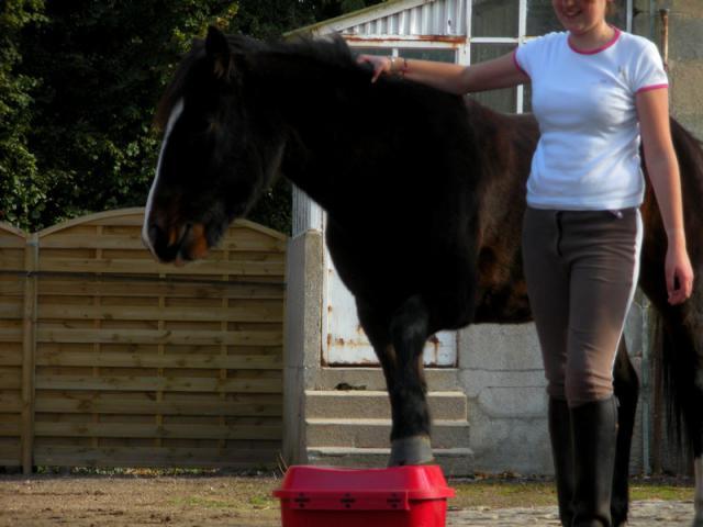 Comment avez vous rencontrer/acheter votre cheval? 268327DSCN9954JPG