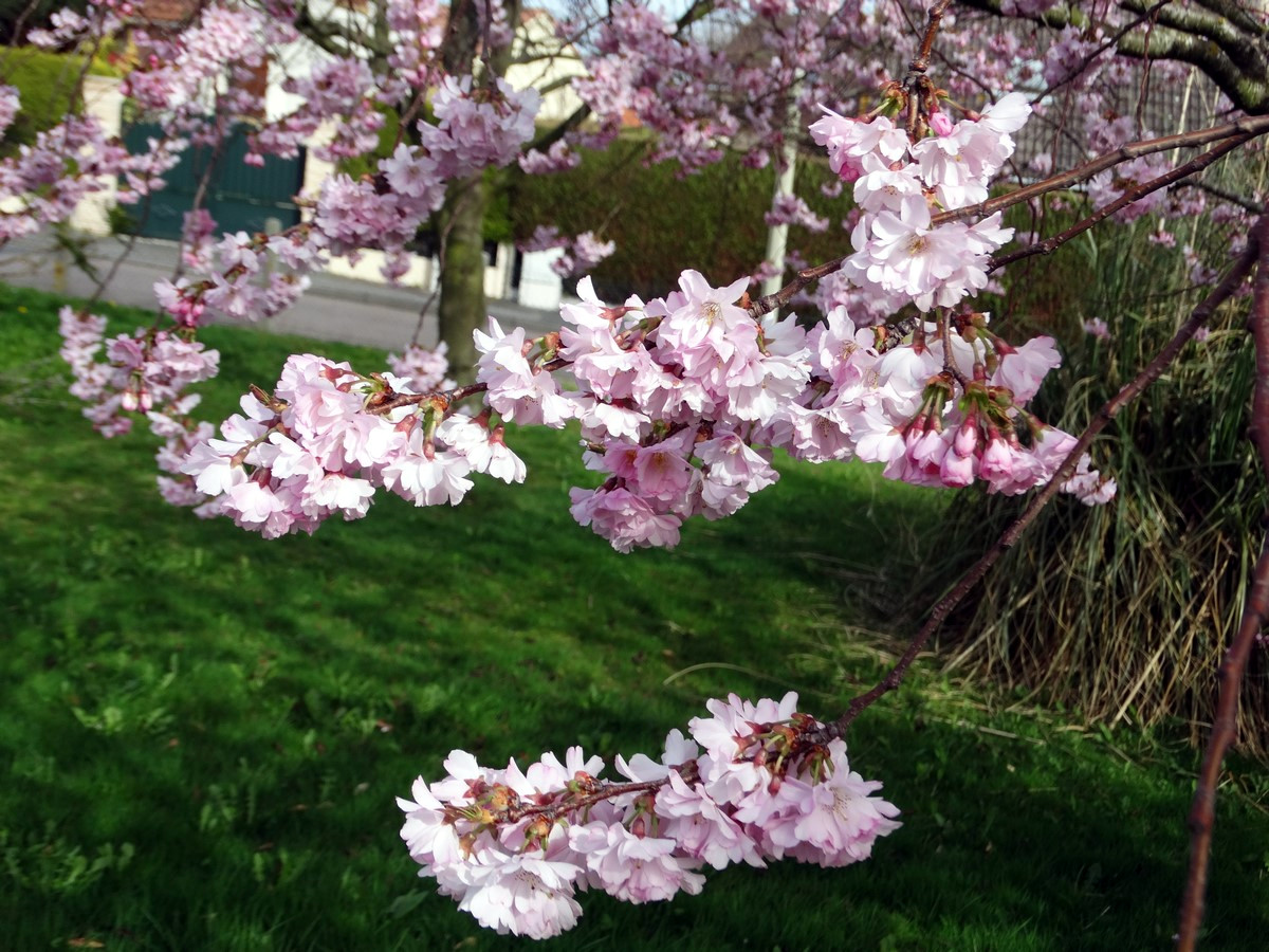 [Fil Ouvert] Fleurs 268970004Copier