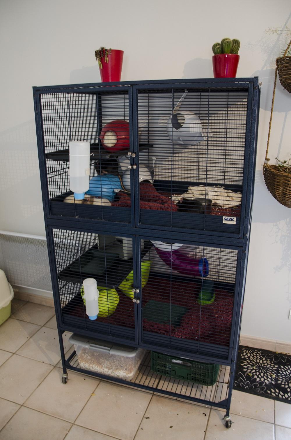 Photos de vos cages - Page 39 2699570162