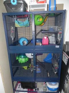 Photos de vos cages - Page 37 270999DSCN6590