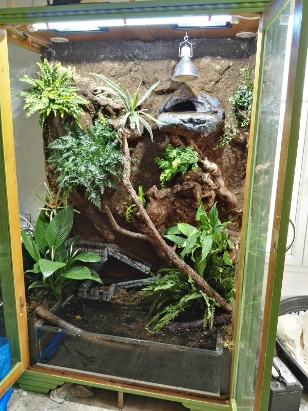 terrarium tropical dragons d'eau 2728063826