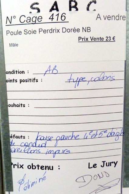 dorking - LUC-SUR-MER (avril 2013) photos des grandes races étrangères 274244P1080933