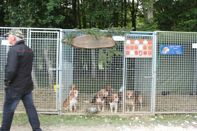 Salon de la chasse de Chateauvillain 2014 276950IMG5890