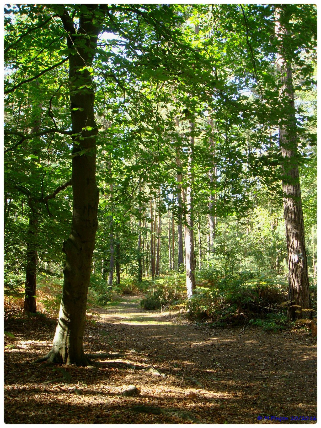[fil ouvert] la forêt dans tous ses états - Page 6 277882DSC011073