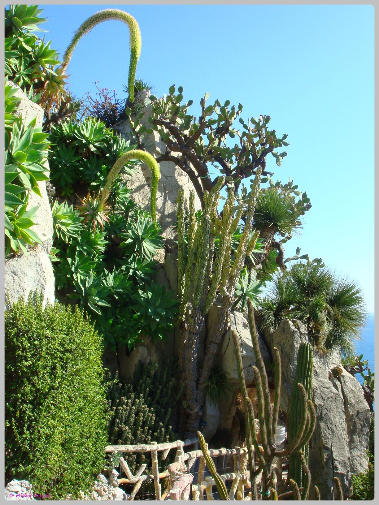Ballade à Monte-Carlo, Monaco et environs.  278514DSC012197