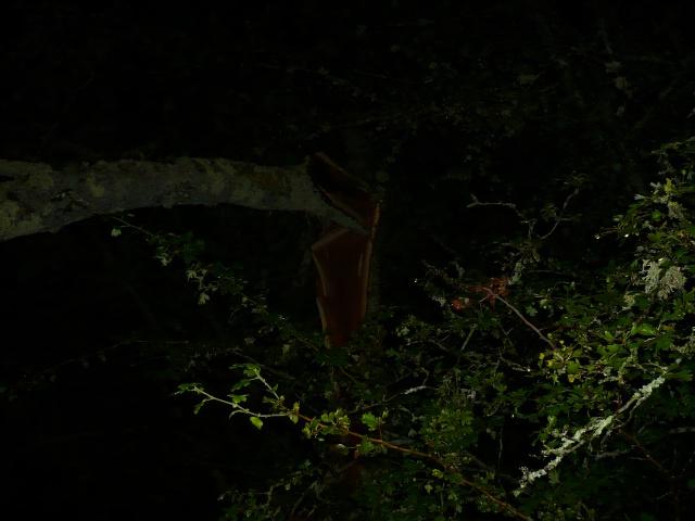 Orages monstres sur le Bordelais dans la nuit du 25 au 26/07 et du 26 au 27/07 282874P1200605