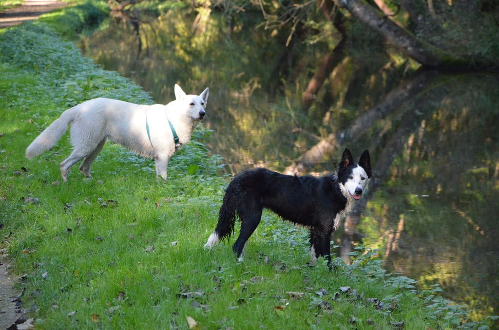 border - L'éducation de ma chienne, Jeune border collie - Page 2 285993DSC2268