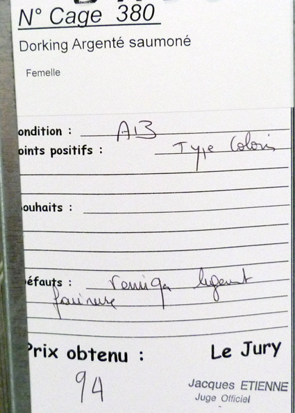 dorking - LUC-SUR-MER (avril 2013) photos des grandes races étrangères 289396P1090020