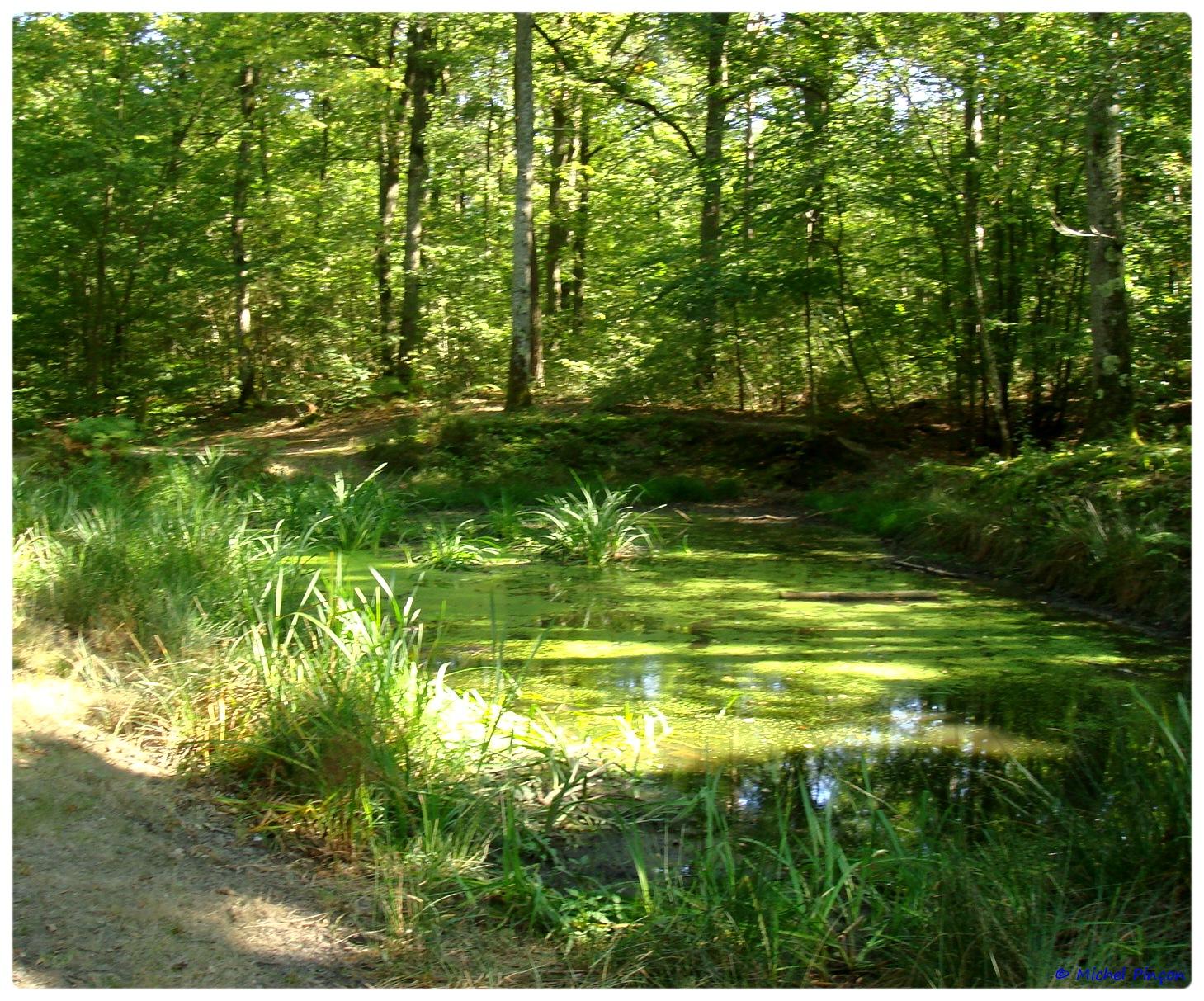 [fil ouvert] la forêt dans tous ses états - Page 6 290165DSC011114