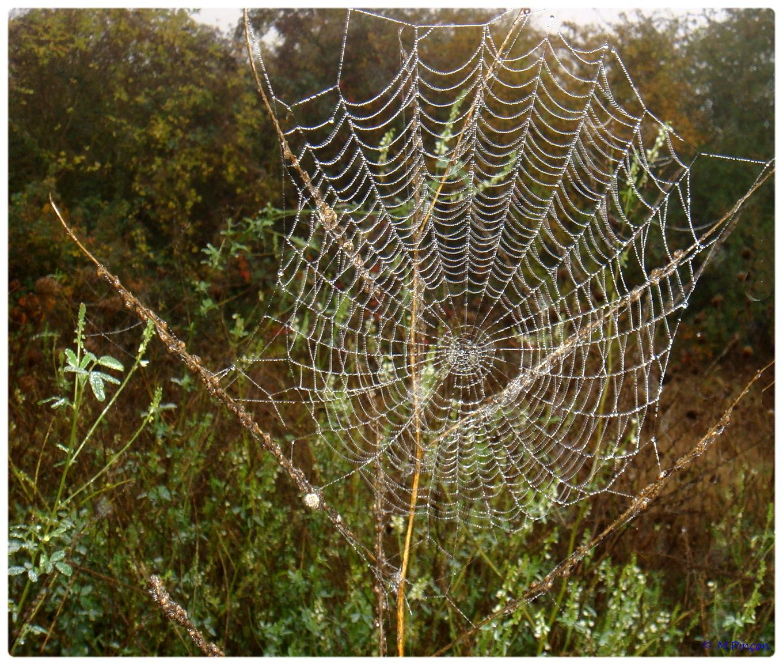 (FIL OUVERT à tous) vous aimez les araignées? - Page 5 290629DSC011263