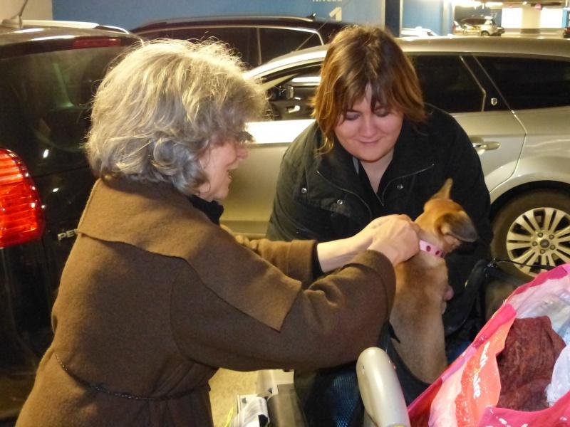 Betty, mini chien, soeur de Dixie 291573P1020983