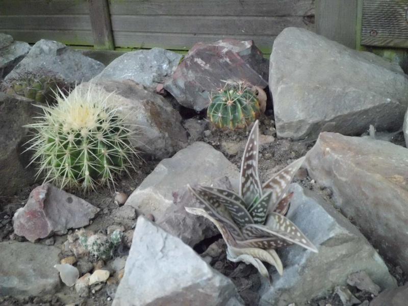 cactus de pô - Page 2 292260CIMG4350