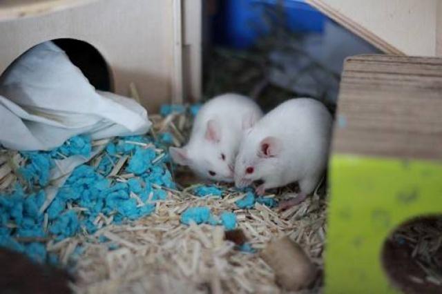 Association White Rabbit- Réhabilitation des lapins de laboratoire - Page 3 2936961883550213484593552462008187082570883854399n
