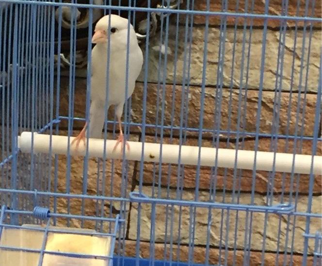 الوسم الرياض على المنتدى حراج الحيوانات 303712752
