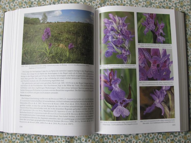 Eccarius - Die Orchideengattung Dactylorhiza 306921IMG3122
