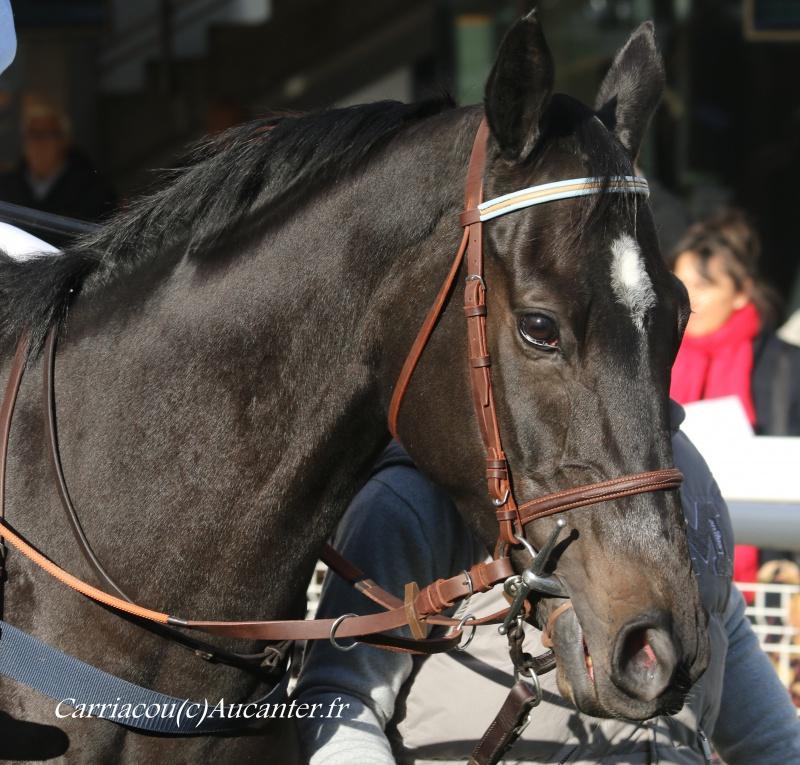 Photos Auteuil 6-11-2016 3071015J6A0298