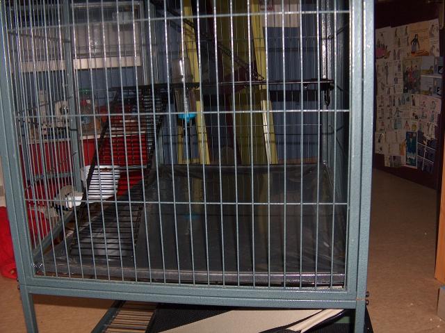 Vends cage nation 2 pour furets (à voir pour rats) 311836HPIM2688