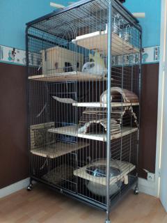 La cage de mes petits monstres  314909DSC00254