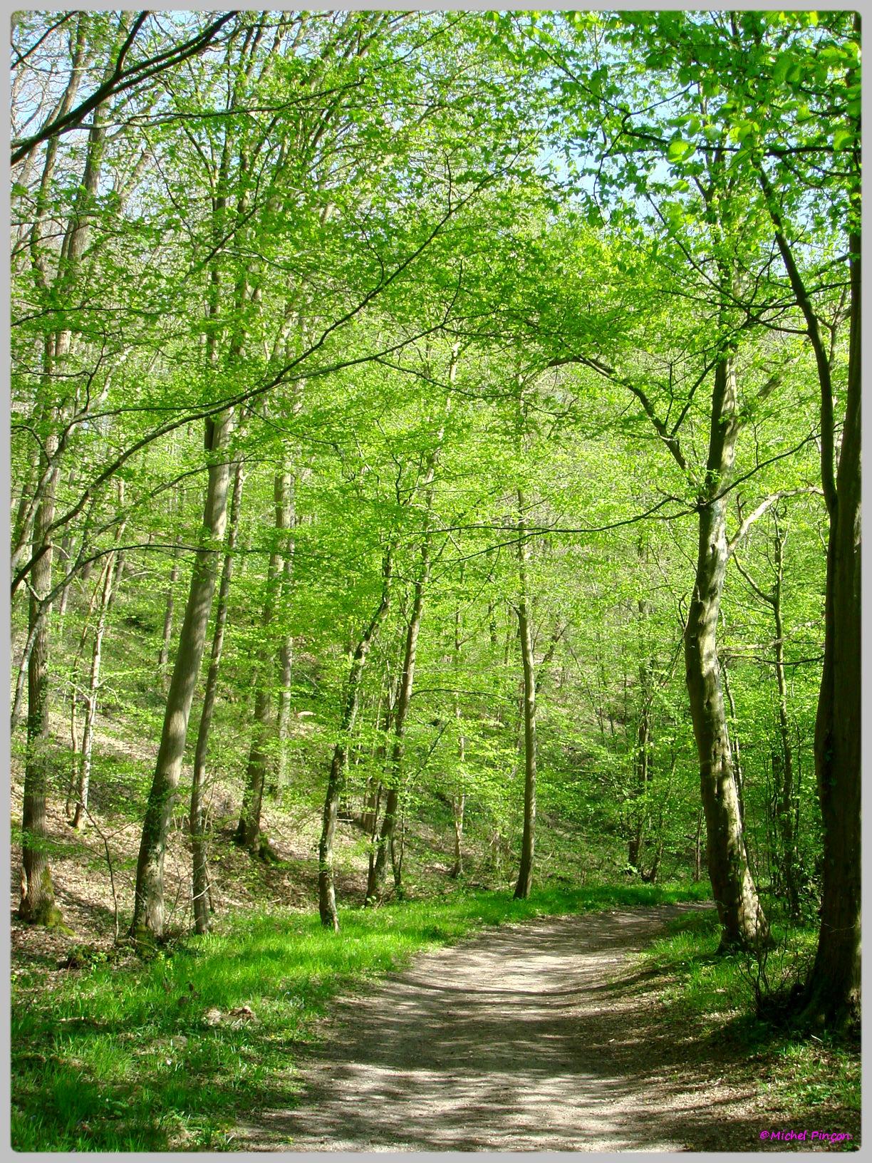 [fil ouvert] la forêt dans tous ses états - Page 13 315369DSC012558