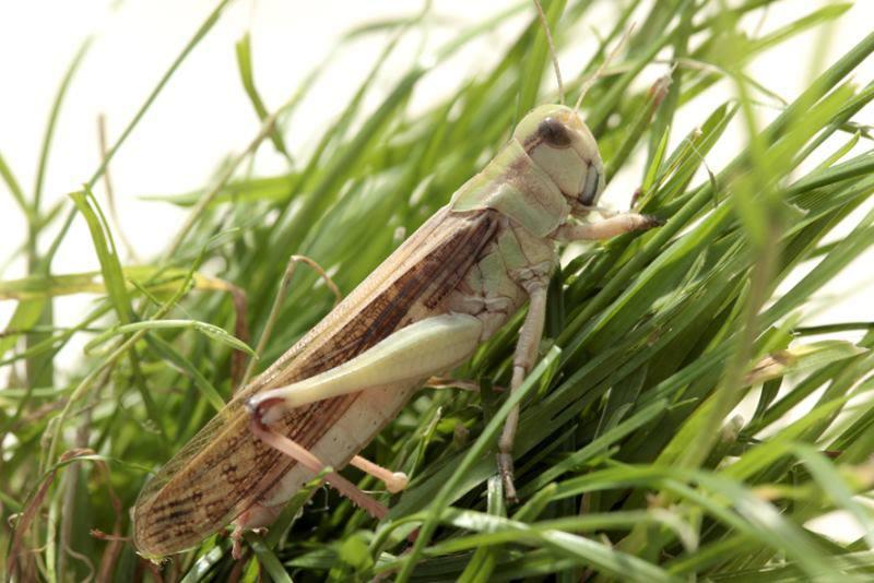 Elevage d'insectes en photos... Pourquoi pas?! 317152997