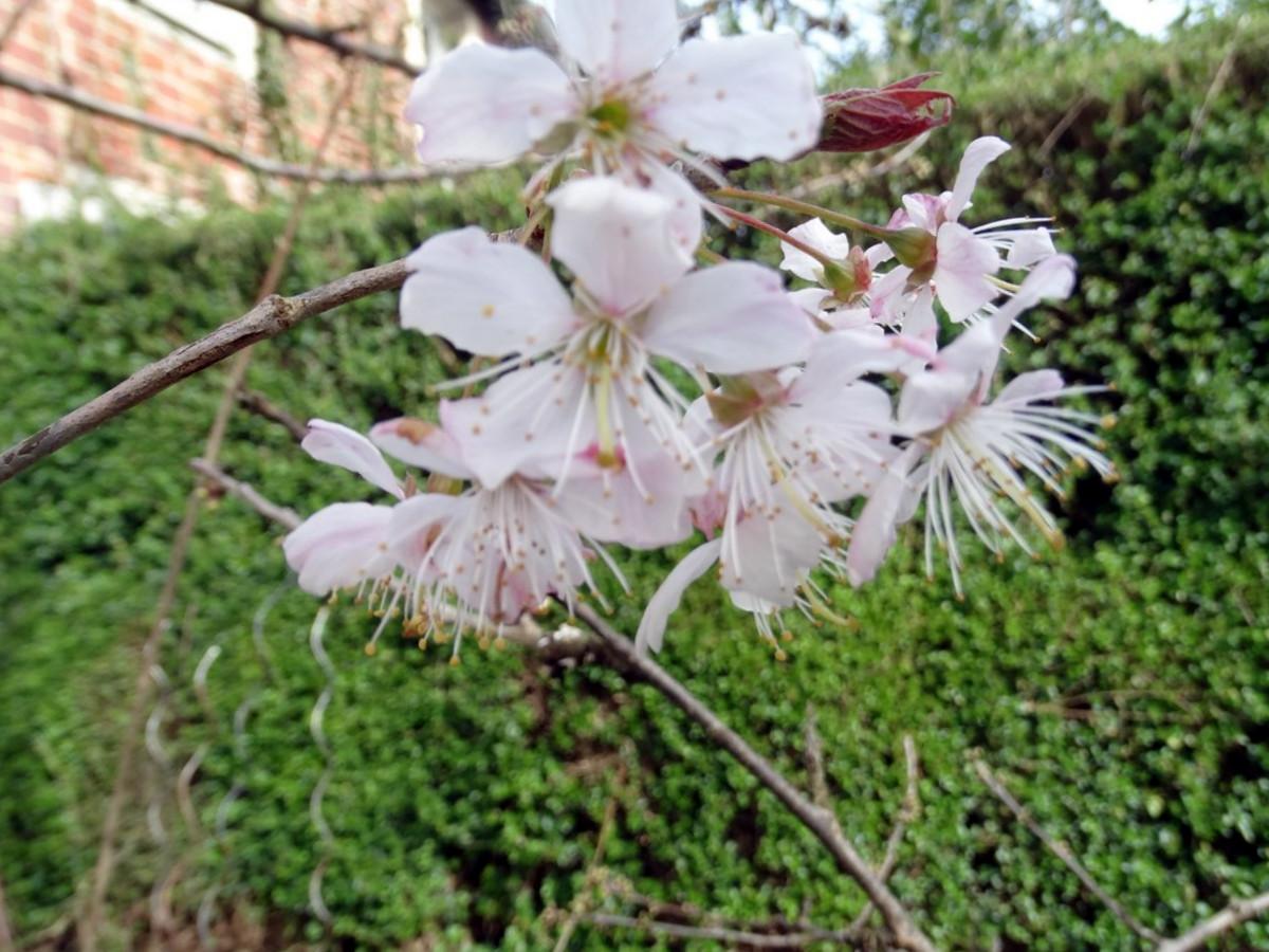[Fil Ouvert] Fleurs 318787014Copier