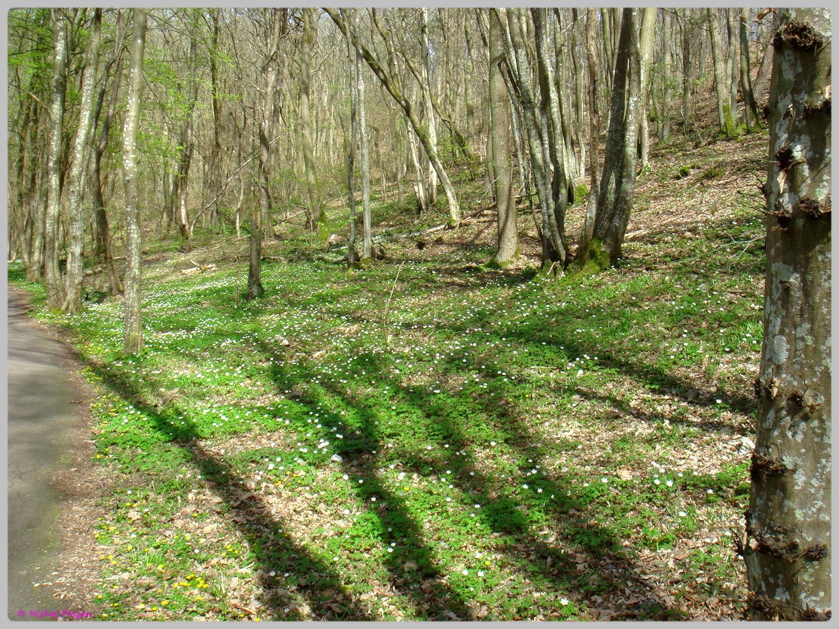 [fil ouvert] la forêt dans tous ses états - Page 13 325058DSC012503