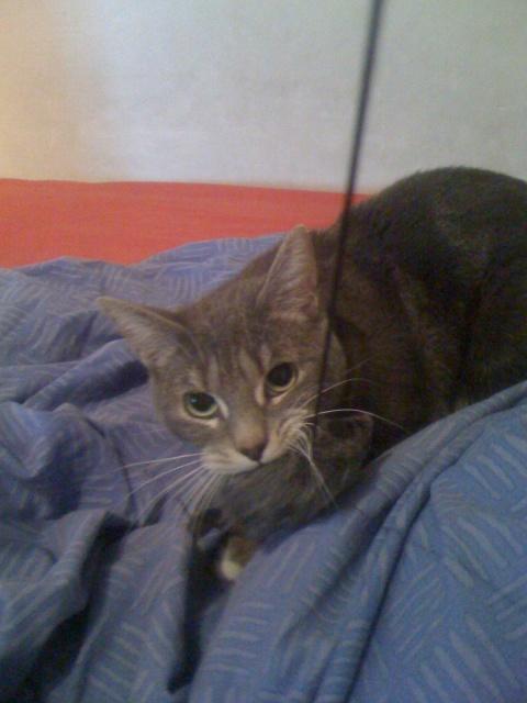JOEY adopté 06/12/2011 328050IMG1077
