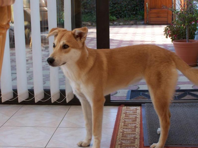 Corie, femelle, 3 mois, joli croisement, très sociable - 7 octobre 2011 - Page 2 33075472H
