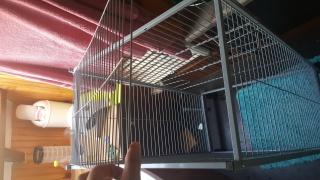 vente cage maxi loft rongeurs et accessoires divers 60 € 331627201610271603361