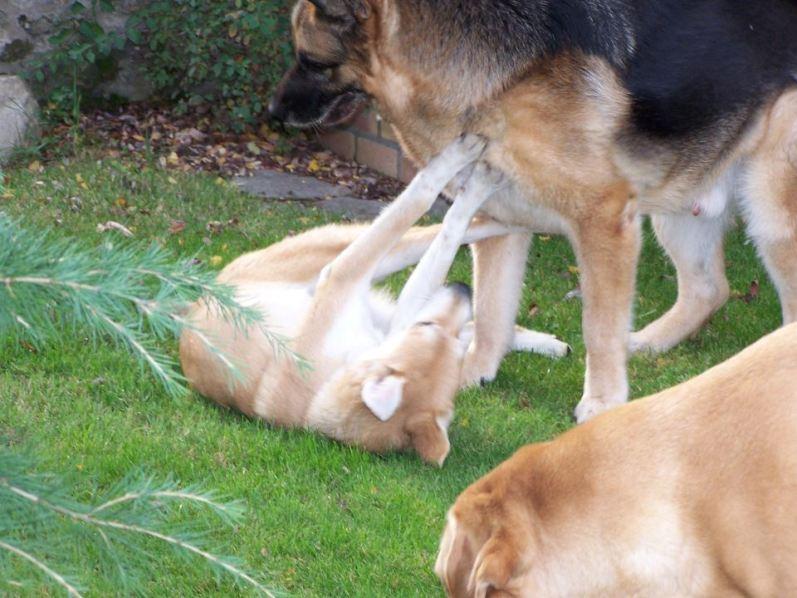 Corie, femelle, 3 mois, joli croisement, très sociable - 7 octobre 2011 - Page 2 33625393s