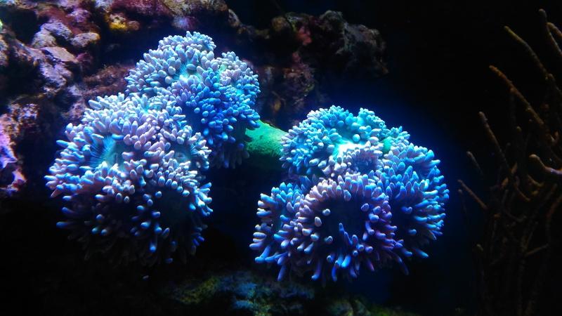 blau gran cubic 92 en jaubert 336755P201610041043121