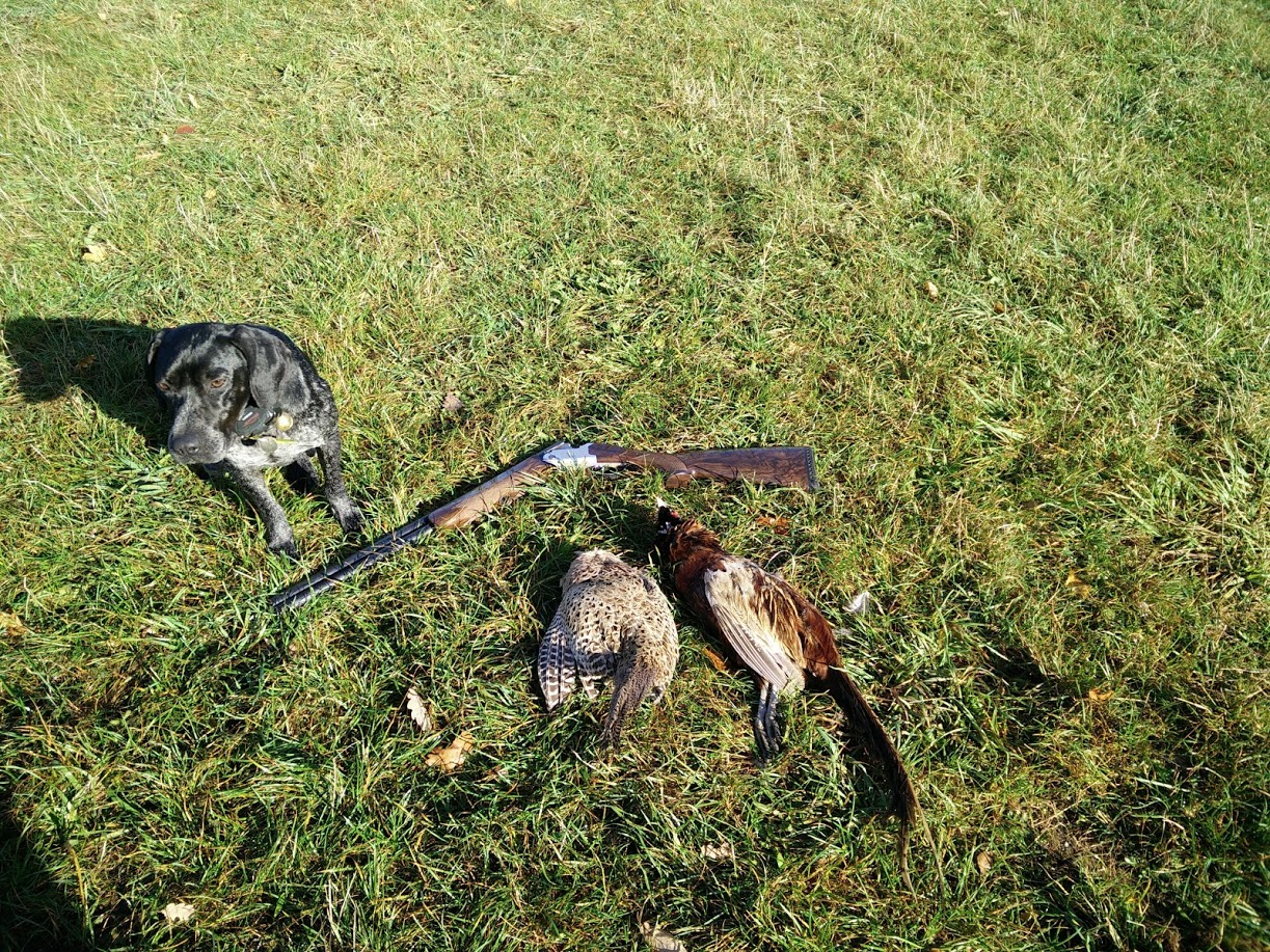 Compte rendu de vos journées chasse petit gibier - Page 2 337538scottfaisans
