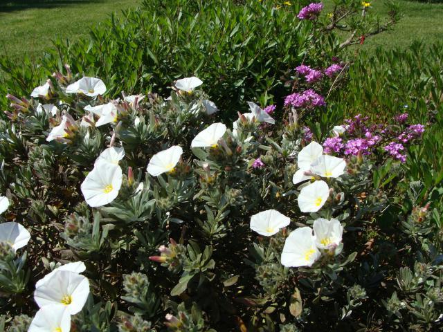 jardin du sud - Page 5 337572az017