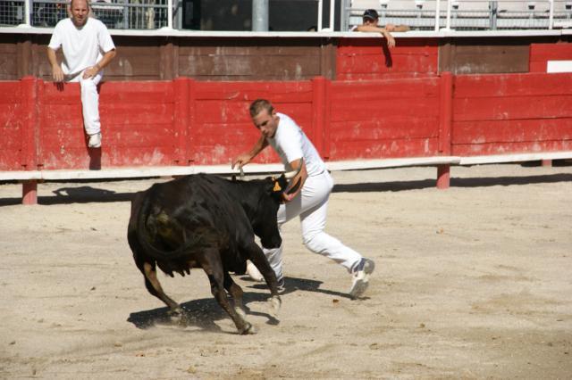Course de vaches VERGEZE 338812DSC00642640x480