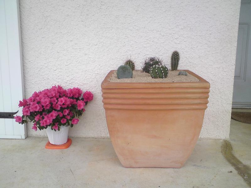 Jardin Mexicain - Page 2 346361DSC04195