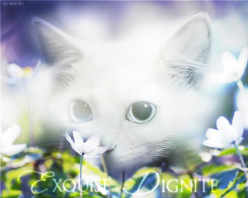 Exquise Dignité. || Guerrière du Clan du Vent. || Libre. 347953exquise