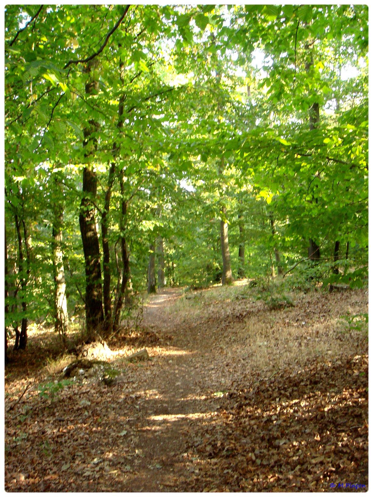 [fil ouvert] la forêt dans tous ses états - Page 6 351960DSC011133