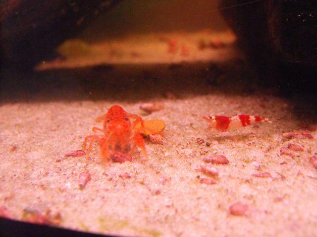 Avez vous des crevettes ou d'autres crustacés? 353738CRSCPO2080111