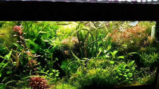 Mes (plus) de 60 plantes dans mon 240 litres - Page 6 357139201412071938201