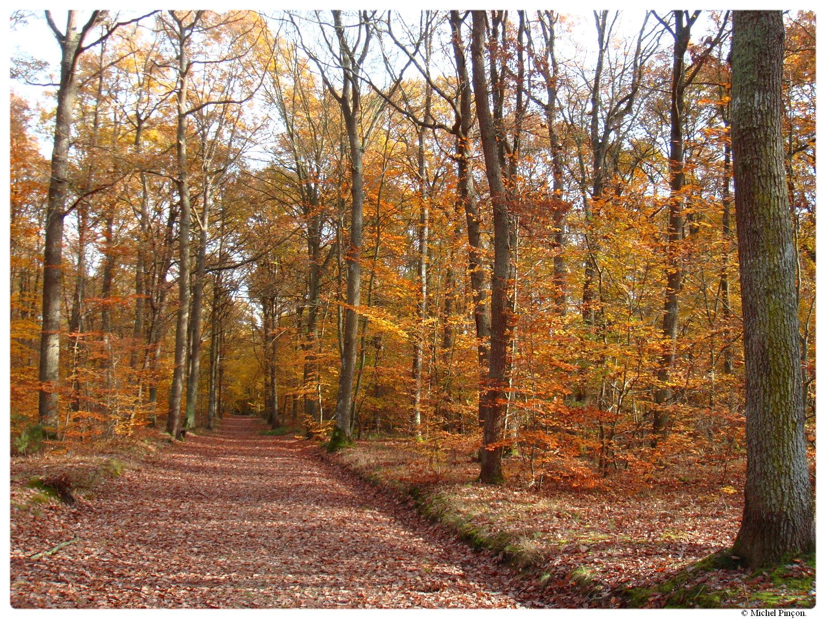 [fil ouvert] la forêt dans tous ses états - Page 17 360494DSC014387