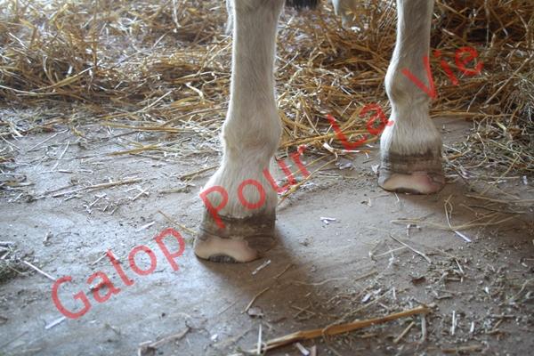 LOONY -  ONC poney né en 2001 - Adopté en juin 2011 par Carole 362580IMG4941