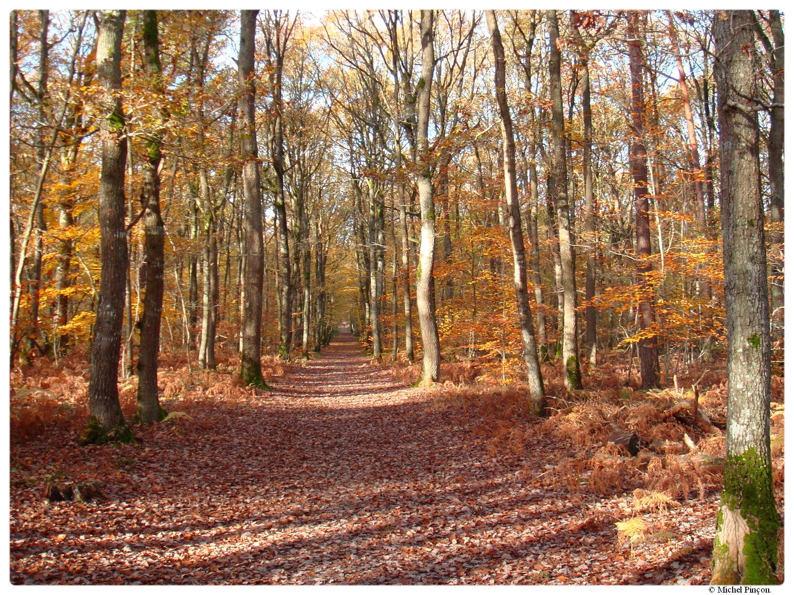 [fil ouvert] la forêt dans tous ses états - Page 17 370520DSC014372