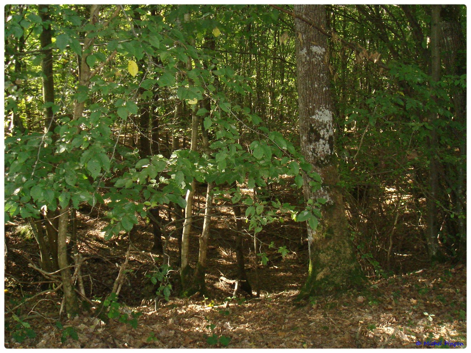 [fil ouvert] la forêt dans tous ses états - Page 6 371468DSC011110