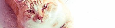 La Guerre des Clans : Magic Cats 371637image