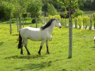 Présentez-nous vos chevaux ! <3 376969DSCN8402